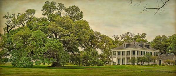 Felicity Plantation Oak and main house, panoramic study 1