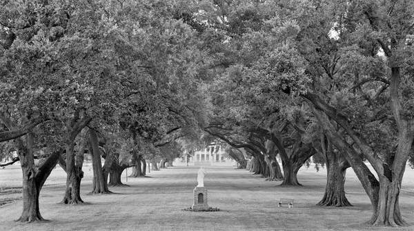 Manresa Oak Alley, view from levee, Convent, LA
