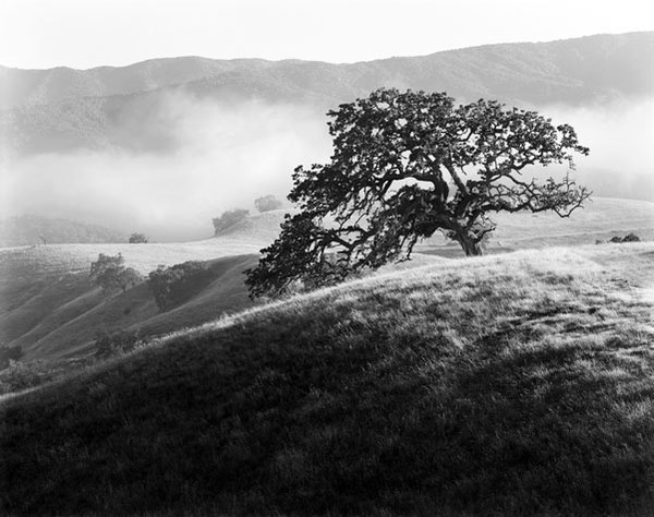 Oak, ranch road, afternoon fog, SLP