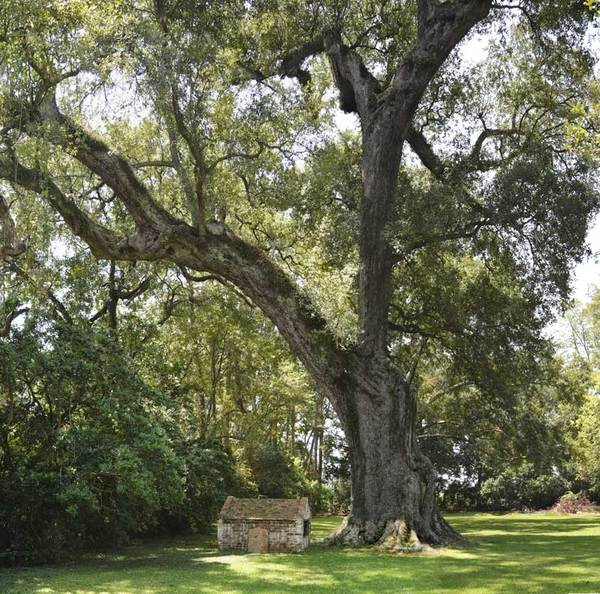 May's Oak, Rosedale, LA – 30'-11""