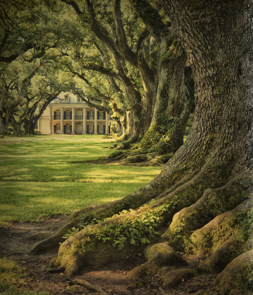 Josephine oak roots and manor house