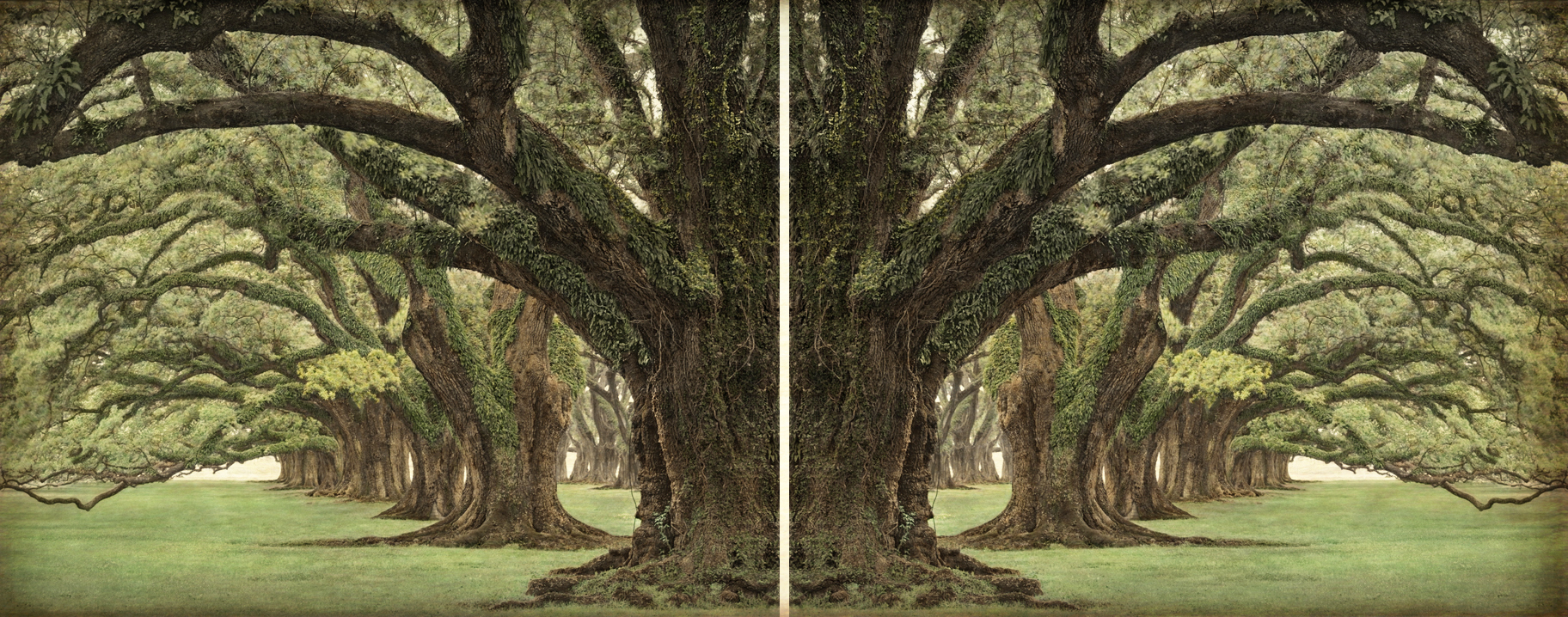 Oak alley diptych, hand-painted canvas print, edition of 10