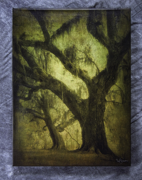 Two oaks with moss, Avery Island, LA - 18x24 print on canvas