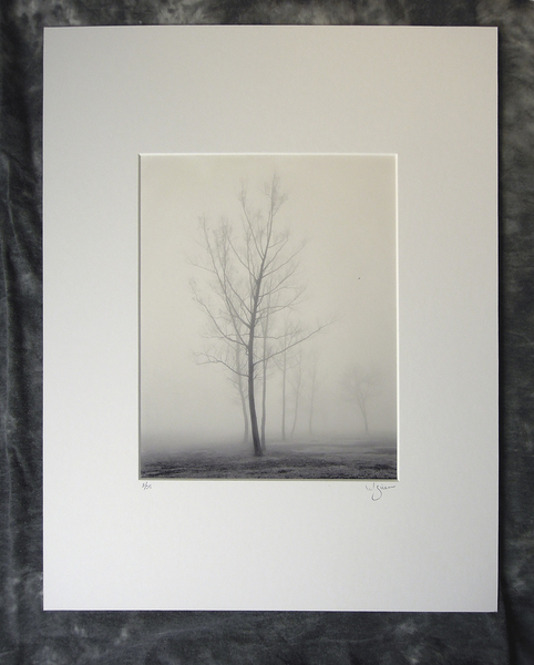 Seven trees in winter fog, Gramercy, LA