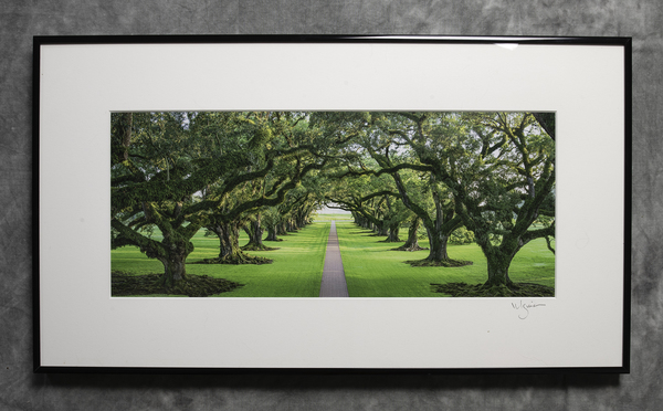 Oak Alley Plantation oaks, view from 2nd floor toward levee
