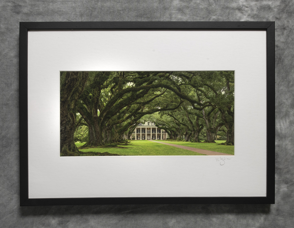 Oak alley Plantation oaks, panorama view from east row