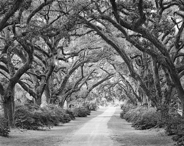 The Oaks Plantation oak alley, view from entrance gate