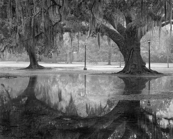 Two oaks and reflections, Audubon Park, New Orleans