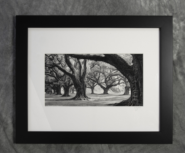Framed print of West row from #3 oak, Oak Alley Plantation